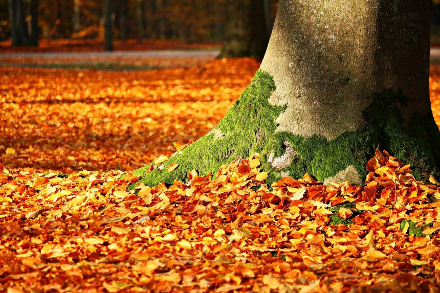 秋キャンプ 紅葉 アウトドア 紅葉キャンプ 焚火 コーヒー 季節